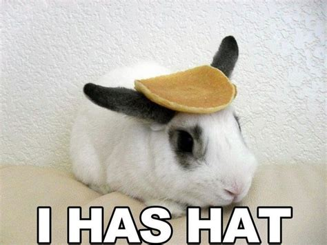 Hat Meme - 59 best images about bunnies on pinterest funny bunnies