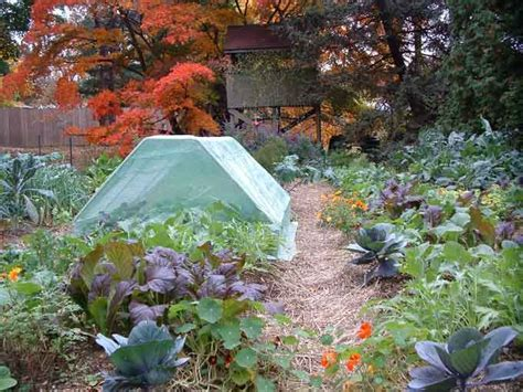 265 Best Gardens Images On Pinterest Vegetable Garden Winter Garden Vegetables