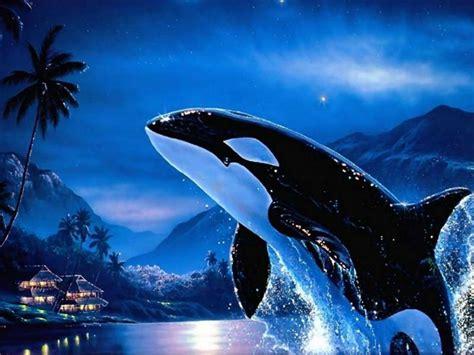 Killer Whale Live Wallpaper