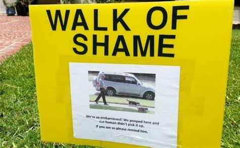 dog walk  shame   outed  science barkpost