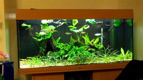 How To Aquascape A Planted Tank by How To Aquascape A Planted Tank