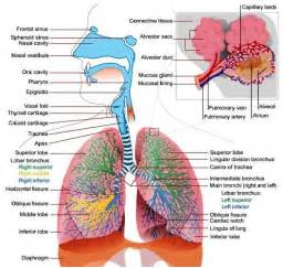 Which Organism Does Not Cause Disease In Plants - respiratory system