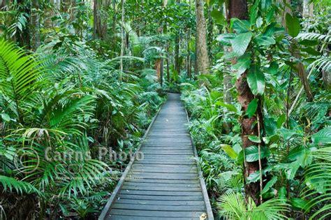 cairns botanical gardens botanical gardens cairns panoramio photo of cairns