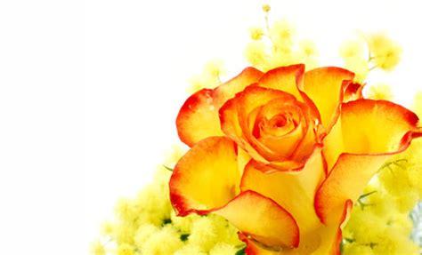 fiore delle donne festa della donna oltre la mimosa ecco quali fiori e