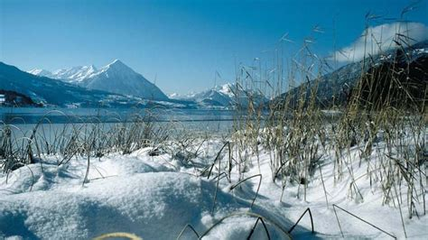 lade thun lake thun region switzerland tourism