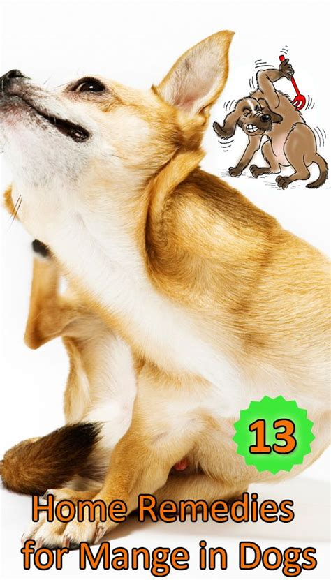 home remedies for puppy mange home remedy for mange on 13 home remedies for mange in dogs http www