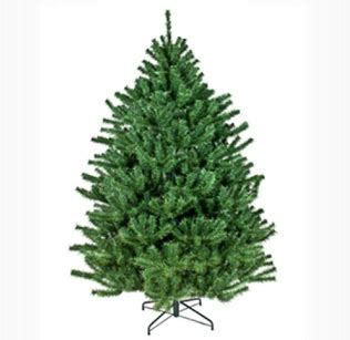 christmas tree types comparison avoiding foreign fakes for