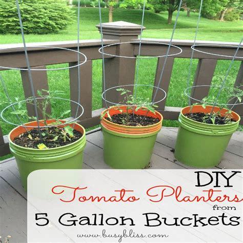 diy tomato fertilizer diy tomato planters from 5 gallon buckets gardens