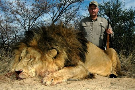 how to a to hunt tactics how to hunt lions culture