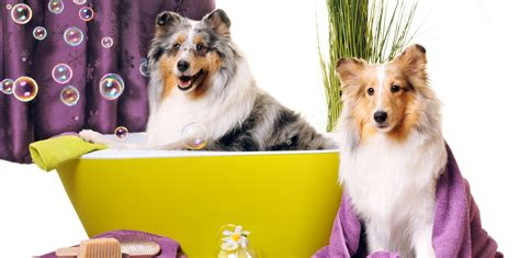 grooming services service grooming charleston sc pet care tired