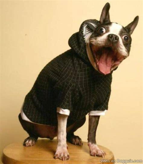 imagenes de animales graciosos image gallery perros graciosos
