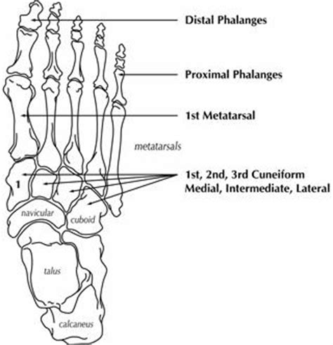 toe diagram dealing with today a metatarsal miracle