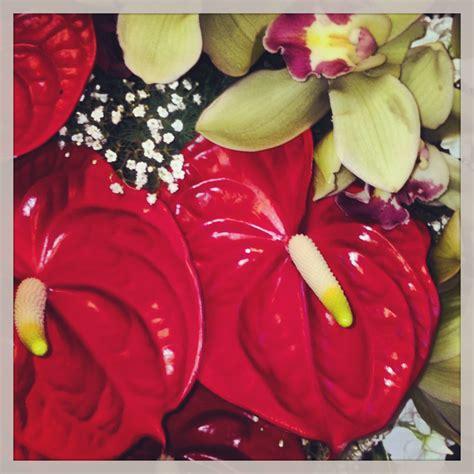 anthurium fiore guida pratica per l anturium come conservare la pianta