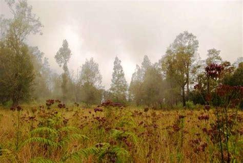 Aborsi Manjur Jawa Timur Wisata Savana Di Indonesia Muhrida Amri