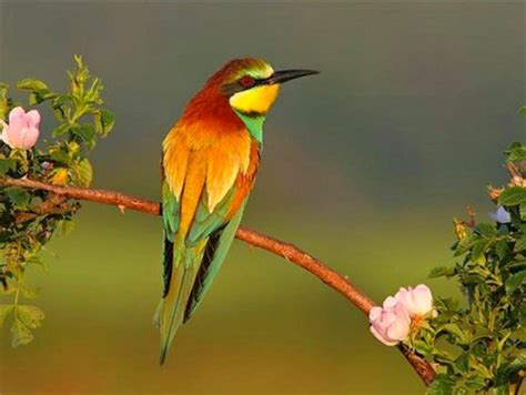 big colorful bird colorful bird birds animals background wallpapers on
