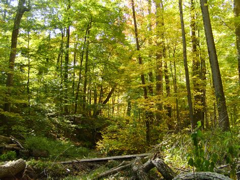 The Woods brum woods batesville in backcountry expeditions