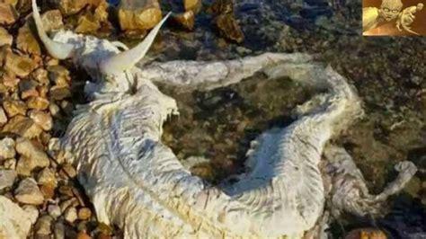 imagenes raras de halloween aparecen criaturas extra 241 as youtube
