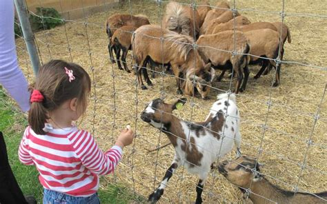 party animals childrens petting zoos  hire