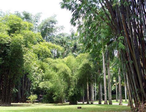 Bogor Botanical Gardens Bogor Botanical Gardens Jakarta Tripomatic
