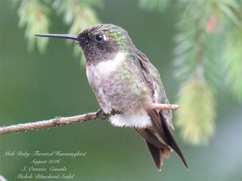 1000 images about in flight on pinterest hummingbirds