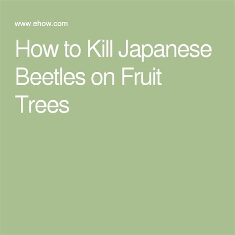 25 best ideas about killing japanese beetles on pinterest