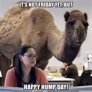 Hump Day Camel Meme - is it friday yet meme memes