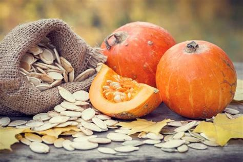 is pumpkin bad for dogs pumpkin seeds for dogs 101 can dogs eat pumpkin seeds