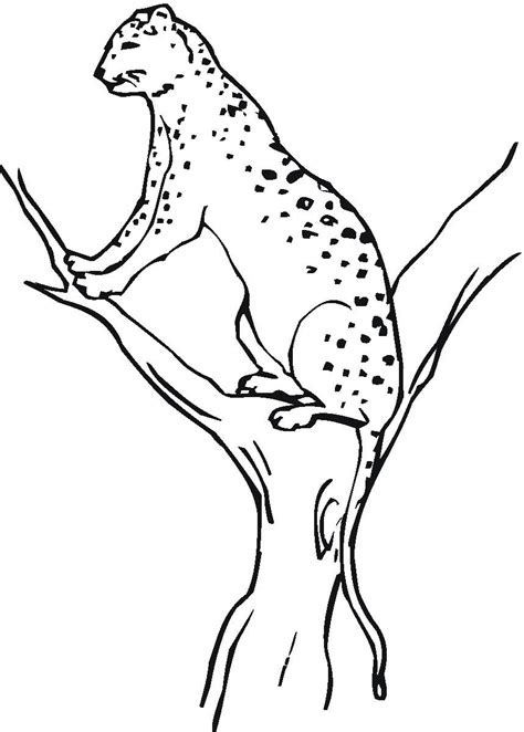 printable cheetah coloring pages  kids