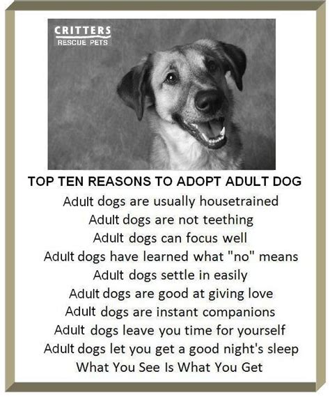 Top 10 Reasons To Adopt A by Top Reasons To Adopt An 566 Randall Road
