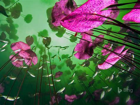 mexico  underwater tulum quintana roo  bing desktop