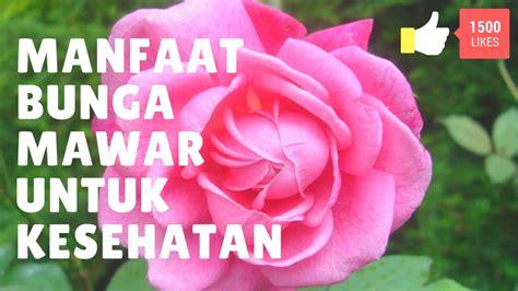 Mawar Maxy manfaat bunga mawar untuk kesehatan
