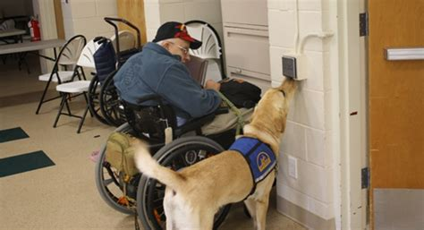 va service dogs study examines impact of service dogs on veterans with ptsd able veterans
