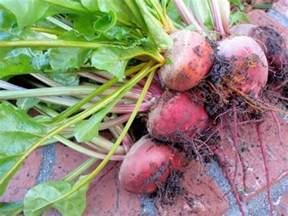 beets a psa and tmi garden betty