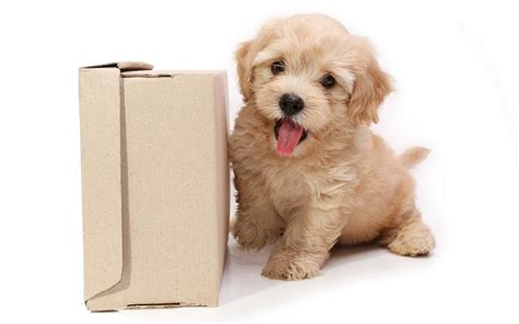 puppy background puppy hd wallpaper free hd wallpapers dogs