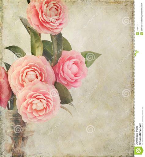 Imagenes Vintage Femeninas | camellia flowers femenina con textura del vintage imagen