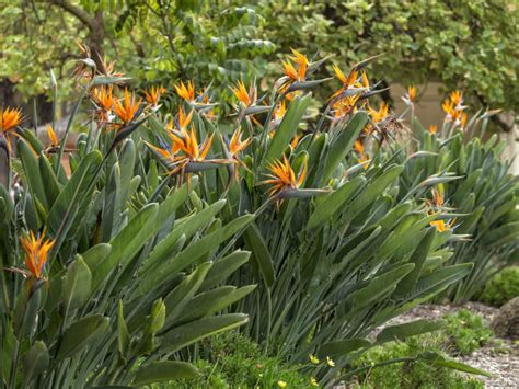 prune  bird  paradise plant world  flowering