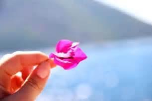 bouganville fiore coltivazione delle bouganville