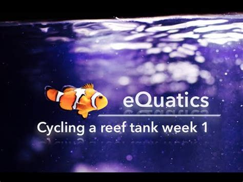 Do I Need To Cycle Tank If I Detox It by How To Cycle A Saltwater Tank Week 1