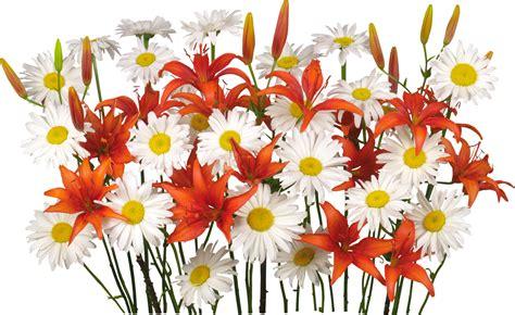imagenes en png para photoshop flores png clipart para photoshop