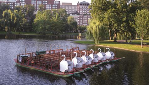 swan boats boston public garden a not so quiet morning in the public garden 171 gary borders