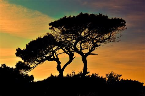 images of trees free photo cyprus cavo greko national park free image