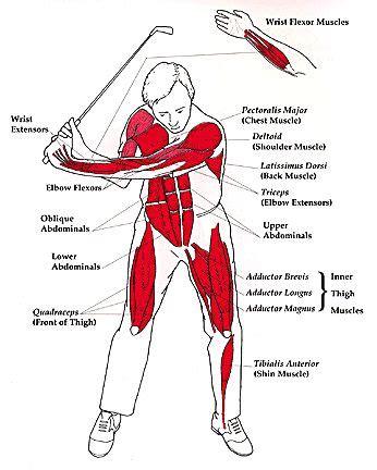 strength exercises for golf swing pinterest the world s catalog of ideas