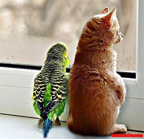 parakeet and cat riends cute cats hq pictures of cute