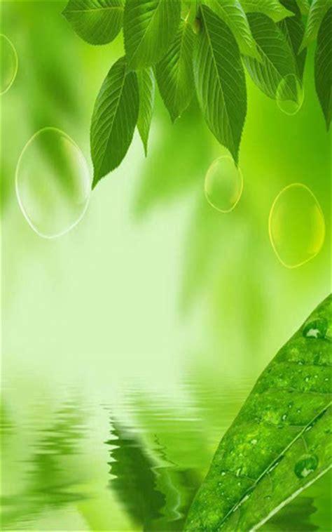 live wallpaper daun download leaf live wallpaper for pc