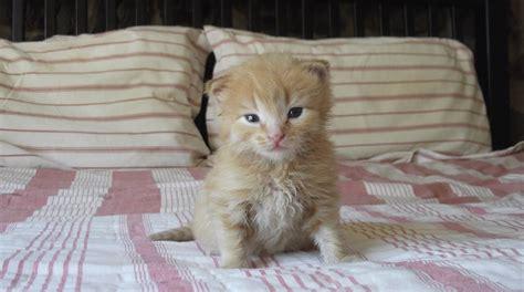 katze macht pipi ins bett was kann tun damit die katze nicht ins babybett geht