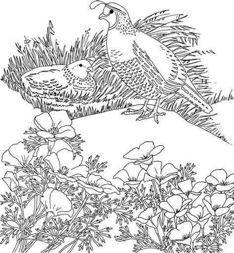california bird coloring page california valley quail coloring page purple kitty
