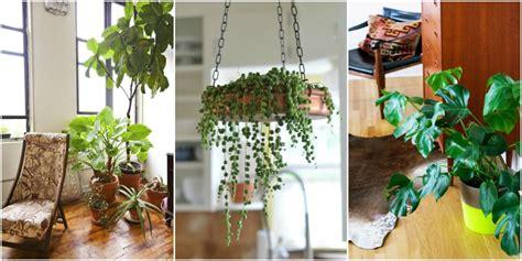 how to arrange indoor plants tanaman indoor ini tidak rewel meski hidupnya jauh dari
