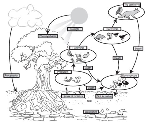 ecosystem diagram mrbgeography introductions 5 climate biomes and ecosystems