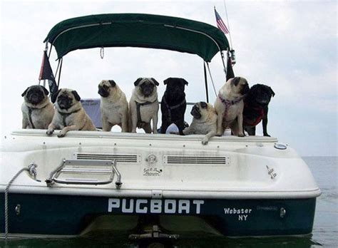 funny names for boats funny boat names damn cool pictures