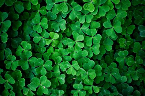green leaves wallpapers pixelstalknet